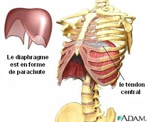 diaphragm_Adam_fr